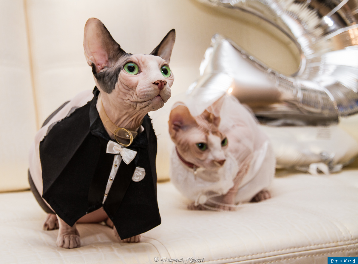Муж до свадьбы фото кота
